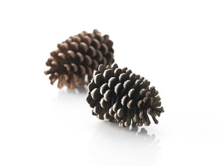pinecones: Lifestyle Element LANG_EVOIMAGES