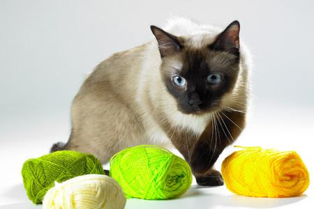 eye ball: Pets