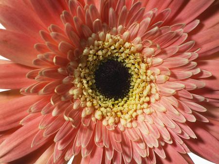 in full bloom: Full Bloom