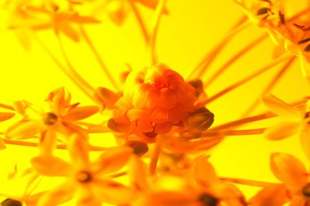 Flower & Leaf LANG_EVOIMAGES