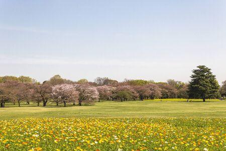 showa: Showa Memorial Park,Tokyo,Japan