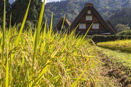 The Historic Villages of Shirakawago and Gokayama,Gifu,Japan
