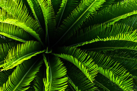 Jungle palm tree plant with green leaves and spikes with nice pattern