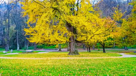 Albero colorato nel parco che perde foglie gialle in autunno