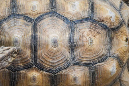 Small detailed turtle shell surface close up pattern top view