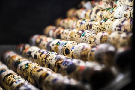 Numbered wild animal bird colorful egg hatchery inside warm light incubator zoo close up