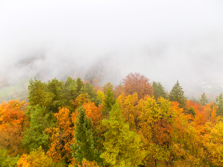 Autumn colored forest leaves on a beautiful morning mistical foggy day