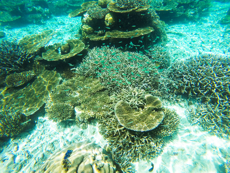 Colorful ocean corals on the reef in the warm tropical sea with diverse underwater marine wildlife Imagens