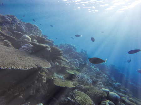 Sun rays penetrating through ocean sea waters and shining on a tropical coral reefs providing light to diverse underwater marine wildlife Stock Photo