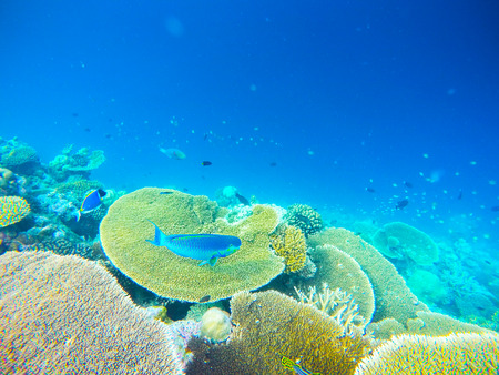 Colorful ocean corals on the reef in the warm tropical sea with diverse underwater marine wildlife Stock Photo