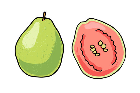 Vector illustration of juicy isolated outline colorful fruit - guava.