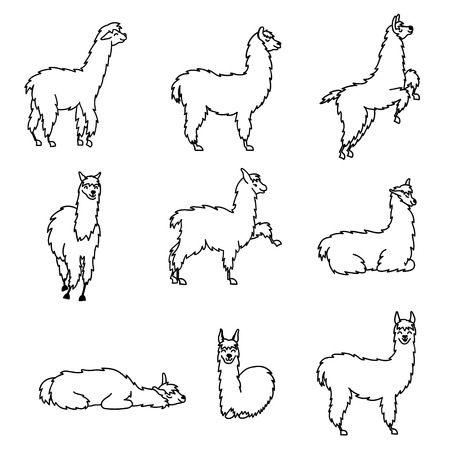 Vector set of south America cute lama. Illustration