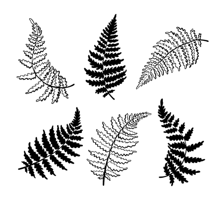 Vector botanical illustration of fern leaf. Isolated outline modern drawing of tropical plant. Set of exotic fern leaves silhouette. Design for fabric, textile, wallpaper, card, wedding invitation