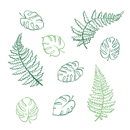 Vector botanical illustration of fern and monstera leaf. Isolated outline modern drawing of tropical plant. Set of exotic palm leaves silhouette. Design for textile, fabric, card, wedding invitation