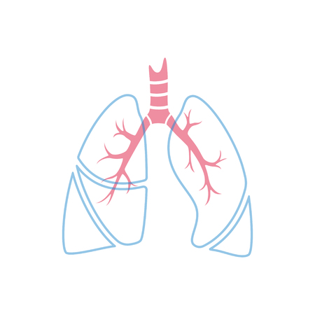 Vector isolated illustration of lung anatomy. Human respiratory system icon. Healthcare medical center, surgery, hospital, clinic, diagnostic . Internal donor organ symbol poster design. donation Illustration