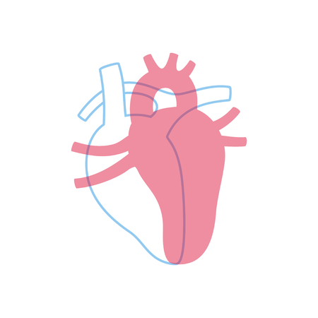 Vector isolated illustration of heart anatomy. Human circulatory system icon. Healthcare medical center, surgery, hospital, clinic, diagnostic icon. Internal donor organ symbol poster design.