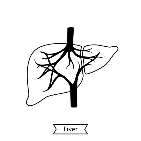 Vector isolated illustration of liver anatomy. Human digestive system icon. Healthcare medical center, surgery, hospital, clinic, diagnostic . Internal donor organ symbol poster design. Donation