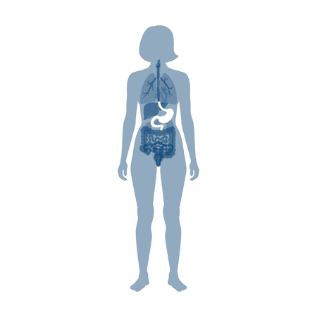 Vector isolated illustration of stomach anatomy. Human digestive system icon. Healthcare medical center, surgery, hospital, clinic, diagnostic . Internal organ symbol poster design. Donation Illustration