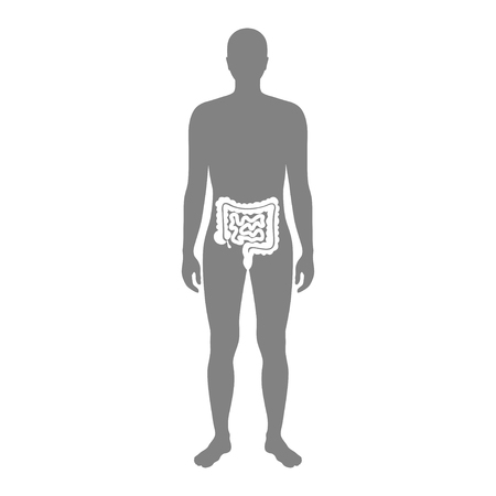 Vector isolated illustration of large and small intestine anatomy in male body. Human digestive system icon. Healthcare medical center, surgery, hospital, clinic . Internal organ symbol design.