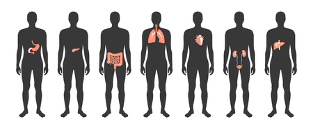 Vector ilustración aislada de órganos internos humanos en el cuerpo masculino. Estómago, hígado, intestino, vejiga, pulmón, testículo, útero, columna, páncreas, riñón, corazón, icono de la vejiga. Cartel médico del donante