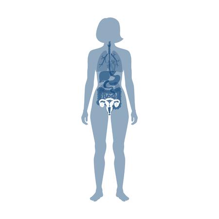 Vektor isolierte Darstellung der Anatomie des weiblichen Fortpflanzungssystems. Gebärmutter, Gebärmutterhals, Eierstock, Eileiter-Symbol. Markendesign-Vorlage für Frauenklinik, Krankenhaus, Klinik, Diagnostik.