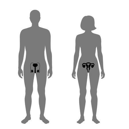 Vector isolated illustration of reproductive system in woman and man silhouette. Isolated black uterus, cervix, ovary, fallopian tube, testis, scrotum, vessels icon in body. Illusztráció