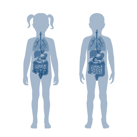 Vector isolated illustration of child internal organs - boy and girl. Stomach, liver, intestine, bladder, lung, testicle, spine, pancreas, kidney, heart, bladder icon.