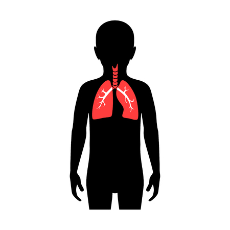 Vector isolated illustration of lung anatomy in boy body. Human respiratory system icon. Healthcare medical center, hospital, clinic logo. Internal child donor organ symbol poster design. donation Фото со стока - 121912555