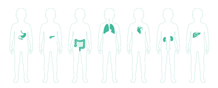 Vector isolated illustration of child internal organs in boy body. Stomach, liver, intestine, bladder, lung, testicle, spine, pancreas, kidney, heart, bladder icon. Donor medical poster Vector Illustration