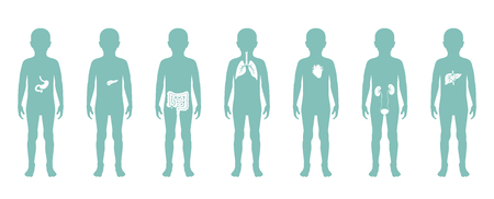 Vector isolated illustration of child internal organs in boy body. Stomach, liver, intestine, bladder, lung, testicle, spine, pancreas, kidney, heart, bladder icon. Donor medical poster Illusztráció