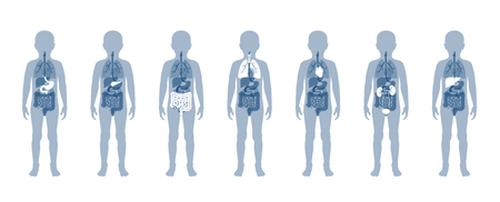 Vector isolated illustration of child internal organs in boy body. Stomach, liver, intestine, bladder, lung, testicle, spine, pancreas, kidney, heart, bladder icon. Donor medical poster