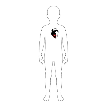 Vector isolated illustration of heart anatomy in boy body. Human circulatory system icon.