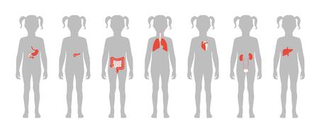 Vektor lokalisierte Illustration der inneren Organe des Kindes im Mädchenkörper. Magen, Leber, Darm, Blase, Lunge, Hoden, Gebärmutter, Wirbelsäule, Bauchspeicheldrüse, Niere, Herz, Blasensymbol. Medizinisches Poster des Spenders
