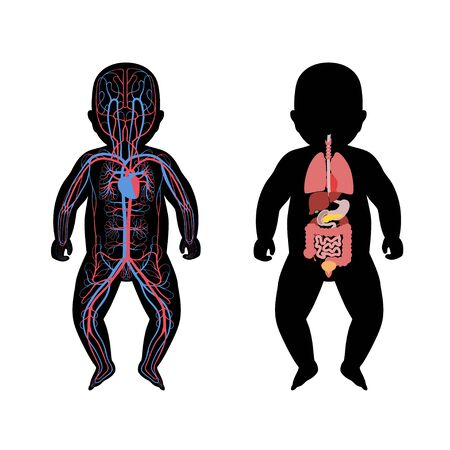 Vector isolated illustration of newborn child internal organs and circulatory system of baby. Stomach, liver, intestine, bladder, lung, testicle, spine, pancreas, kidney, heart, bladder icon. Stock fotó - 131841497