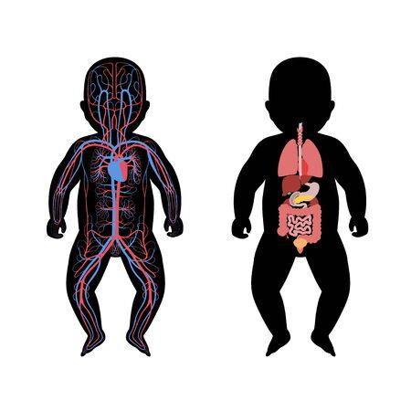 Vektor isolierte Darstellung der inneren Organe des Neugeborenen und des Kreislaufsystems des Babys. Magen, Leber, Darm, Blase, Lunge, Hoden, Wirbelsäule, Bauchspeicheldrüse, Niere, Herz, Blasensymbol.