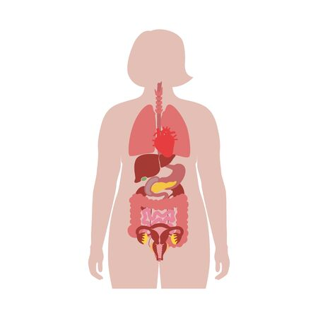 Vector isolated illustration of human internal organs in obese female body. Stomach, liver, intestine, bladder, lung, uterus, spine, pancreas, kidney, heart, bladder icon. Medical poster Vectores