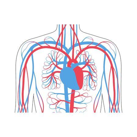 Illustrazione vettoriale isolata del sistema circolatorio arterioso e venoso umano nell'anatomia polmonare. Diagramma dei vasi sanguigni. Infografica medica per uso poster, educativo, scientifico e medico.