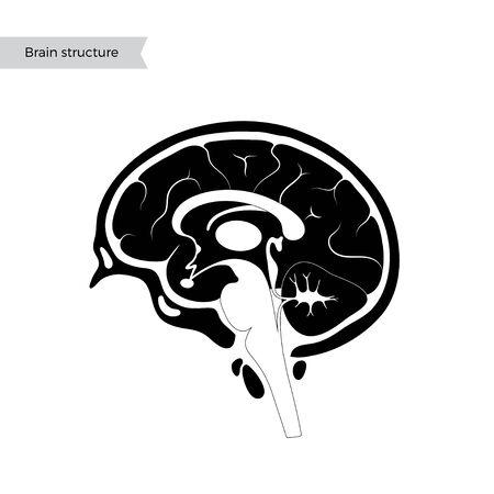 Vector ilustración aislada de componentes del cerebro humano detallada anatomía. Infografía médica para carteles, educación, ciencia y uso médico. Vista sagital del cerebro