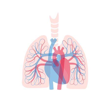 Ilustracja wektorowa na białym tle ludzkiego układu krążenia tętniczego i żylnego w anatomii płuc. Schemat naczyń krwionośnych. Infografiki medyczne do użytku plakatowego, edukacyjnego, naukowego i medycznego. Ilustracje wektorowe
