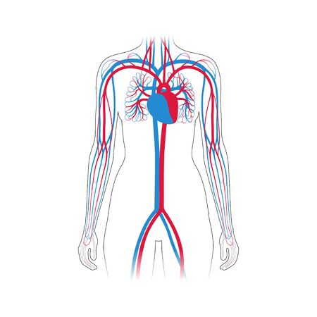 Vector isolated illustration of human arterial and venous circulatory system in hand anatomy. Blood vessels diagram. Medical infographics for poster, educational, science and medical use.