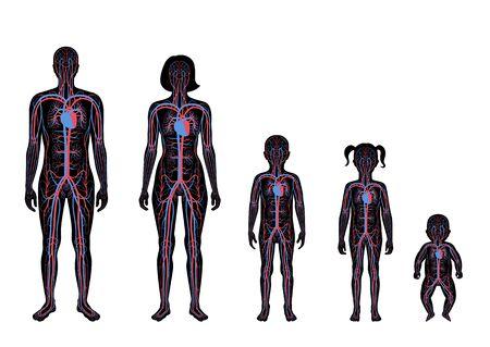 Illustrazione vettoriale isolata dell'anatomia del sistema circolatorio arterioso e venoso umano in silhouette uomo, donna, bambino. Diagramma dei vasi sanguigni. Infografica medica per poster, scienza e uso medico.