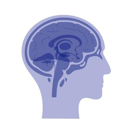 Conjunto de ilustración vectorial aislada de componentes cerebrales en la cabeza del hombre. Anatomía detallada del cerebro humano. Infografía médica para carteles, educación, ciencia y uso médico. Vista sagital del cerebro