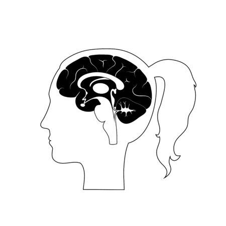 Conjunto de ilustración vectorial aislada de componentes cerebrales en cabeza de mujer. Anatomía detallada del cerebro humano. Infografía médica para carteles, educación, ciencia y uso médico. Vista sagital del cerebro Ilustración de vector