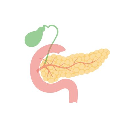 Vector isolated illustration of pancreas, duodenum and gallbladder anatomy. Human digestive system icon.