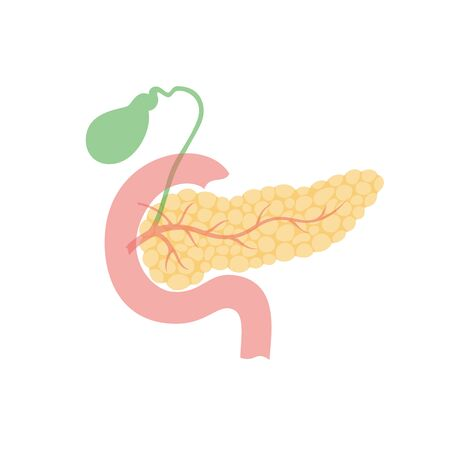 Vector isolated illustration of pancreas, duodenum and gallbladder anatomy. Human digestive system icon. Healthcare medical center, hospital, clinic . Internal organ symbol poster design