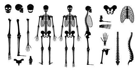 Anatomie du squelette de l'homme humain devant, de profil et de dos. Vector illustration plate isolée du crâne et des os. Bannière Halloween, médicale, éducative ou scientifique
