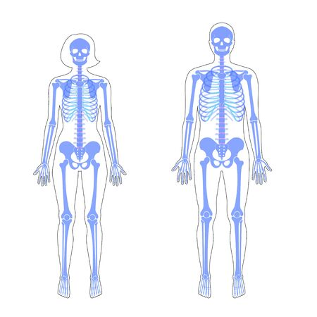 Woman and man skeleton anatomy in front view. Vector isolated flat illustration of human skull and bones in body. Halloween, medical, educational or science banner