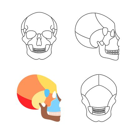 Human skull anatomy. Flat vector medical illustration isolated. Structure of facial skeleton with main parts. Cranium diagram with part bones. Front, back and side view. Educational, science poster