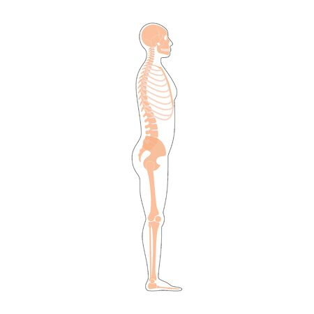 Human man skeleton anatomy in  profile side view. Vector isolated flat illustration of skull and bones in body. Halloween, medical, educational or science banner