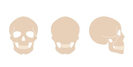 Human skull anatomy. Flat vector medical illustration isolated. Structure of facial skeleton. Cranium diagram. Educational, science poster. Front, back and side view.